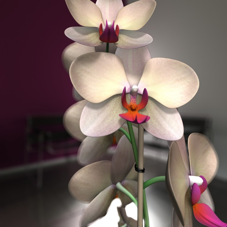 Orchidea close-up
